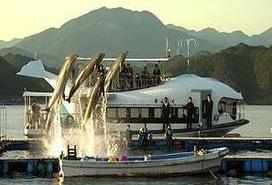 《海豚湾》获奥斯卡奖 引发其实拍地的市长抗议