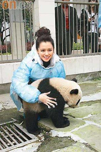 徐若瑄认养熊猫宝宝 努力宣传关爱动物讯息(图)