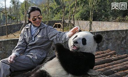 贵圈236期|卖萌为主:熊猫开启走红新姿势