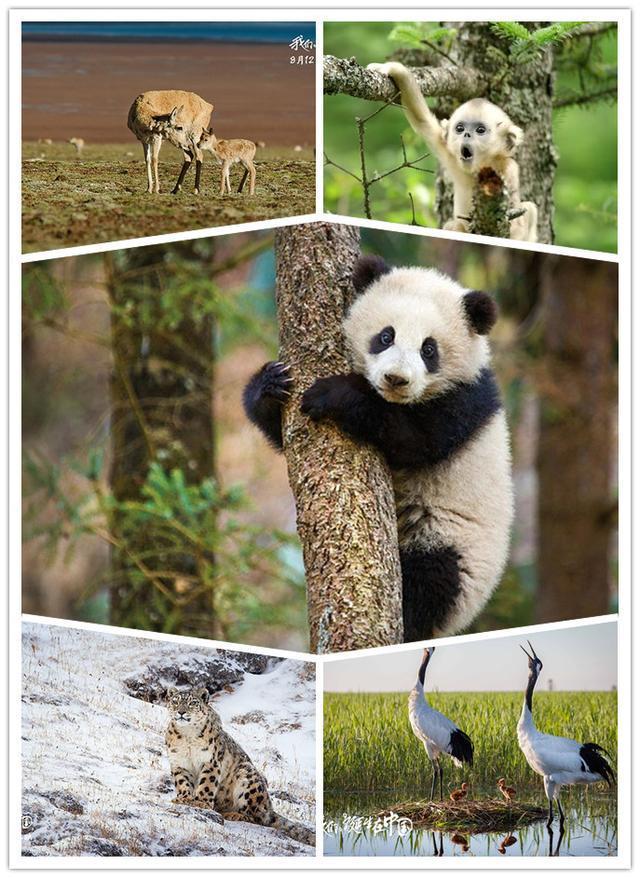 这些动物纪录片里的主角绝对会让你飙泪
