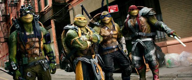 妈妈团:神龟笑点频频,黑粉一言不合就开打
