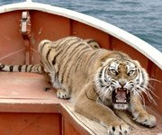 老虎对派露出杀机