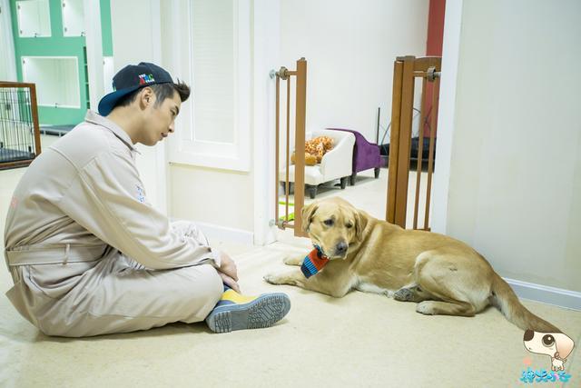 《神犬小七》收视创新高 金世佳成暑期档屏霸