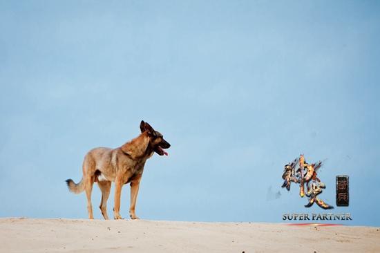 《神犬奇兵》首播第一 助湖南卫视收视四连冠