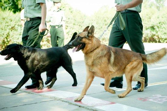 《神犬奇兵》不畏拍摄难度 打造情怀军旅戏