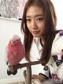 朴信惠与粉色鹦鹉合照 素颜仍娇俏可人(图)