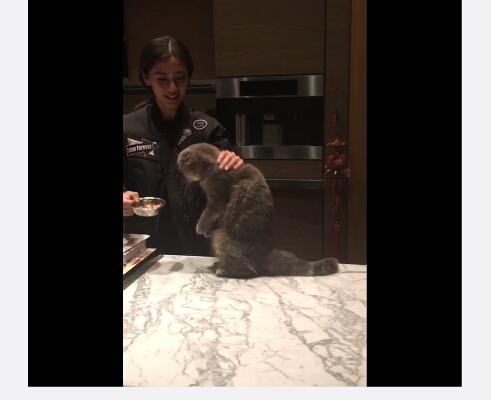 Baby素颜出镜get新技能 训练猫咪学起立坐下