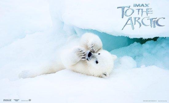 IMAX纪录片《北极》上海参展 触动特殊学生心灵