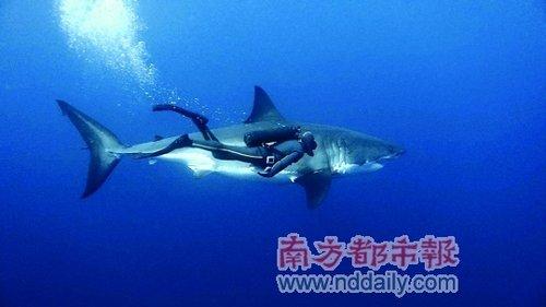 雅克-贝汉《海洋》引进内地:和海豚鲸鱼齐畅游