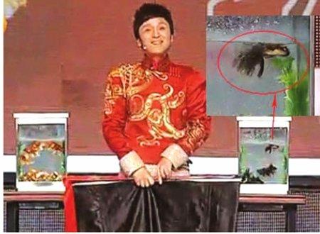 傅琰东表演金鱼疑致死 回应:鱼漂较大导致侧翻