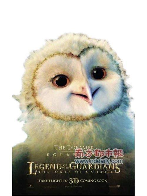 四部进口大片11月狂欢 《猫头鹰王国》3D来袭