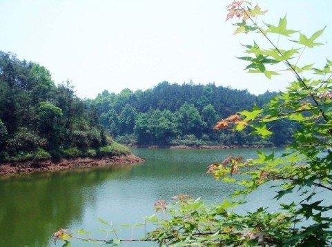 《双节棍》原始森林取景 自然和功夫完美结合