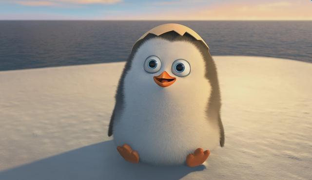 壁纸 动物 企鹅 640_370