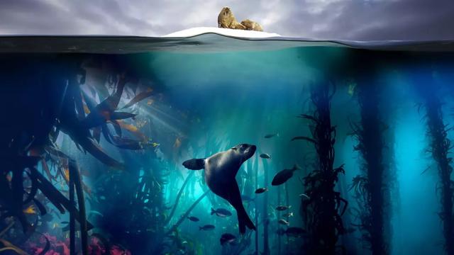 腾讯视频《蓝色星球2》获评2017最高分纪录