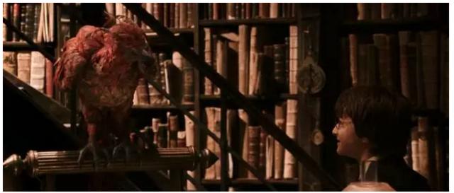 来听资深哈迷解读《神奇动物》 有哪些隐藏彩蛋