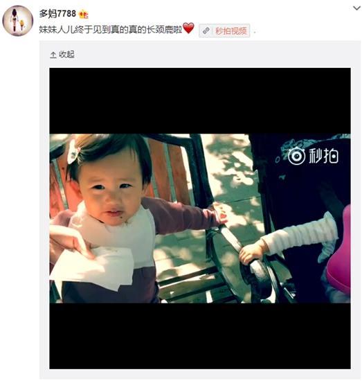 黄磊二女儿见长颈鹿