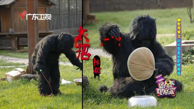 """人类退化成""""大猩猩"""",混入动物园对游客飞吻打招呼,舞剑跳广场舞"""