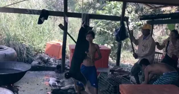抵制狗肉节,好莱坞群星拍了这样一个视频