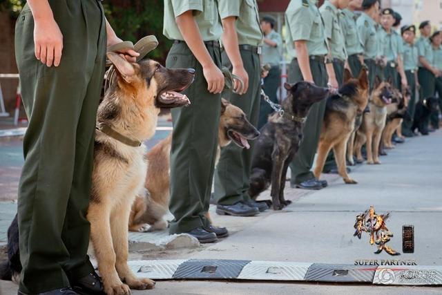 《神犬奇兵》攻占七月暑期档 人犬情首登荧屏