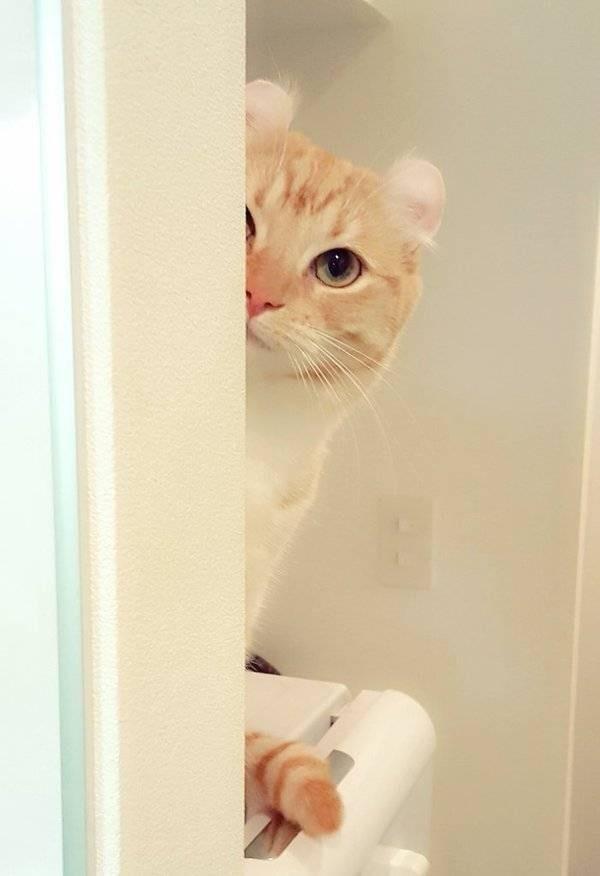 猫奴们就是这样心甘情愿被猫星人统治的
