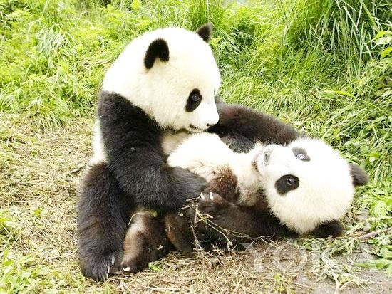 金正恩爱动物 世界著名动物园