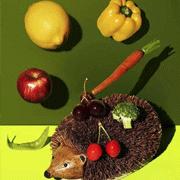 别急着对素食主义者翻白眼,先了解人家一下