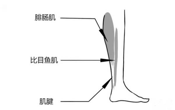 """八公举:小腿外翻的原因不是骨头,拯救""""剪刀腿""""姿势.gif,变成长直美腿再来谢我"""