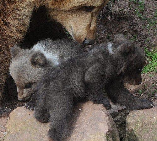 小熊珠子编步骤图解