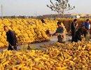 农产品:通胀引发价值重估