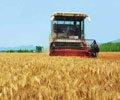 农业部:抓好当前农业生产保障农产品供应