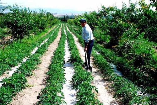 适合红壤丘陵果园间作的作物有哪些?