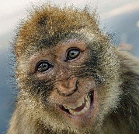 动物罕见笑脸