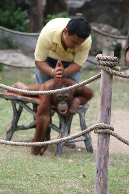 人与动物性行为_人与动物和睦相处(组图)