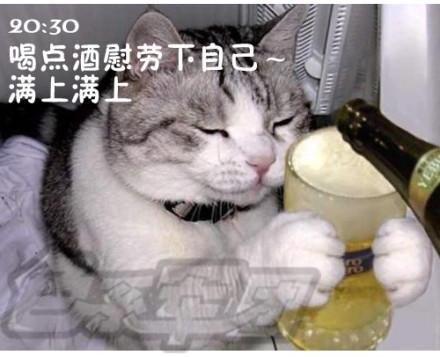 表情搞笑丝猫咪演绎上班族的一天[表情]猫组图包搞怪猫图片