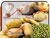 为什么会出现部分农产品囤积居奇