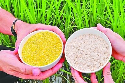 千人试吃转基因大米_千人试吃转基因大米一场严肃的科普活动
