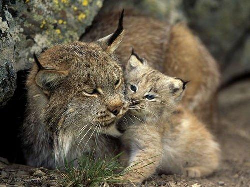 """组图:动物世界精灵可爱的""""baby"""""""
