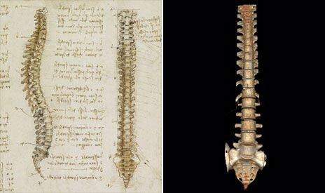 英展出达芬奇人体解剖素描 精确度惊人(图)