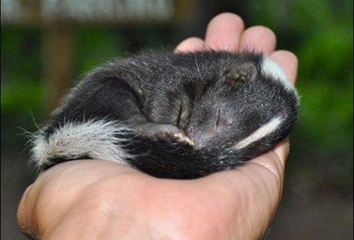 动物们的销魂睡姿