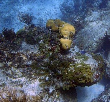 科学家发现海绵拥有七成人类基因