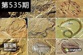一个蛋能值百万?古化石为啥这么值钱?