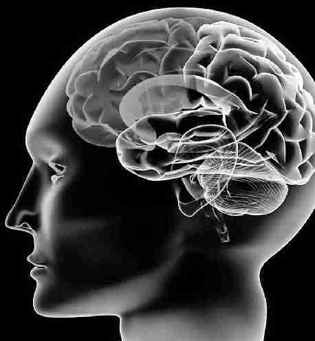 美科学家着手绘制人脑图谱