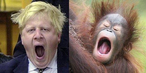 市长恶搞伦敦照片骑柴犬图片表情包表情将其猩猩与网友作比(图