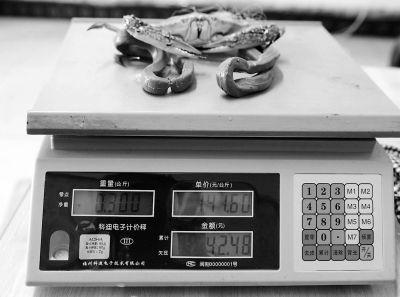 梭子蟹(公)与绳子总重0.3公斤