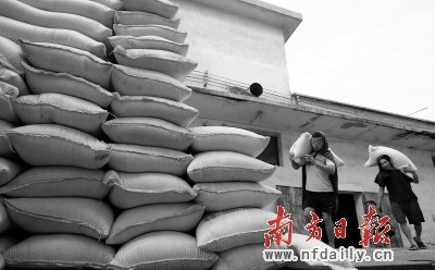佛山市禅城区城北粮库工人正在搬运粮食.南方日报记者 卢奕诚 摄