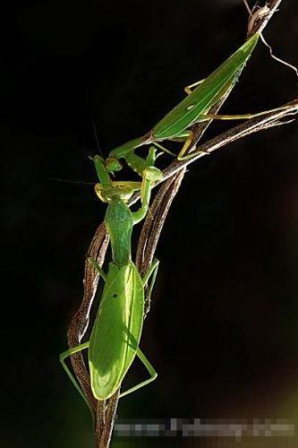 母精液此举的目的是为了确保公螳螂注入,并刺激螳螂持续射精其体内.宏程序初中数控图片