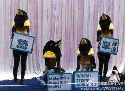 女人裸体人体彩绘美女企鹅木耳欧美图片