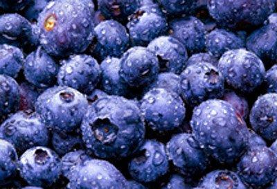 超级水果蓝莓营养价值极高最宜五大人群