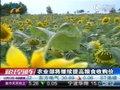 视频:农业部将继续提高粮食收购价