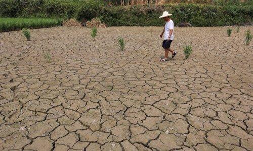 高温干旱将推涨粮食价格?